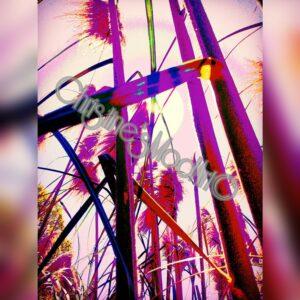 Photography (8x10)